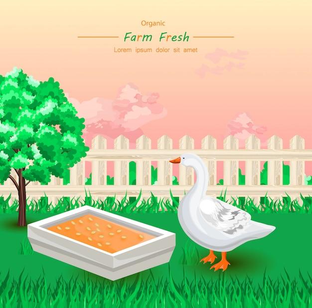 Oie mangeant des aliments frais biologiques à la ferme