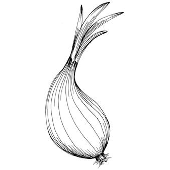Oignon isolé illustration dessinée à la main. style gravé végétal. croquis de dessin de nourriture végétarienne. produit du marché fermier. le meilleur pour la conception de logo, menu, étiquette, icône, timbre.