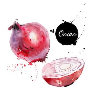 Oignon rouge. peinture à l'aquarelle dessinée à la main sur fond blanc. illustration vectorielle