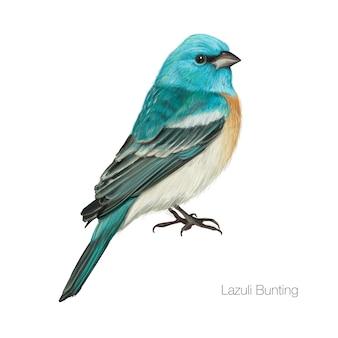 Oiseau cardinal bleu exotique