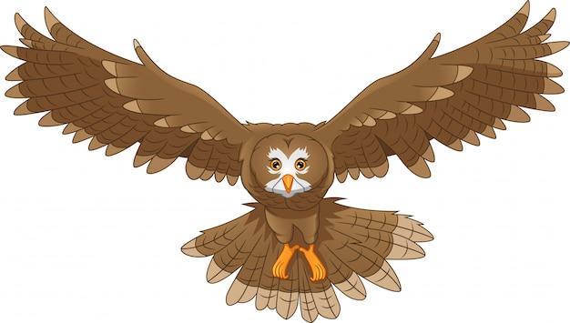 Oiseau chouette dessin animé