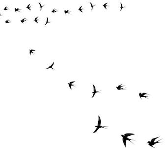 Oiseau dans le ciel