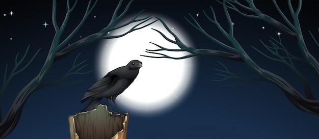 Oiseau dans la scène de nuit