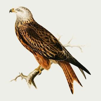 Oiseau faucon dessiné à la main
