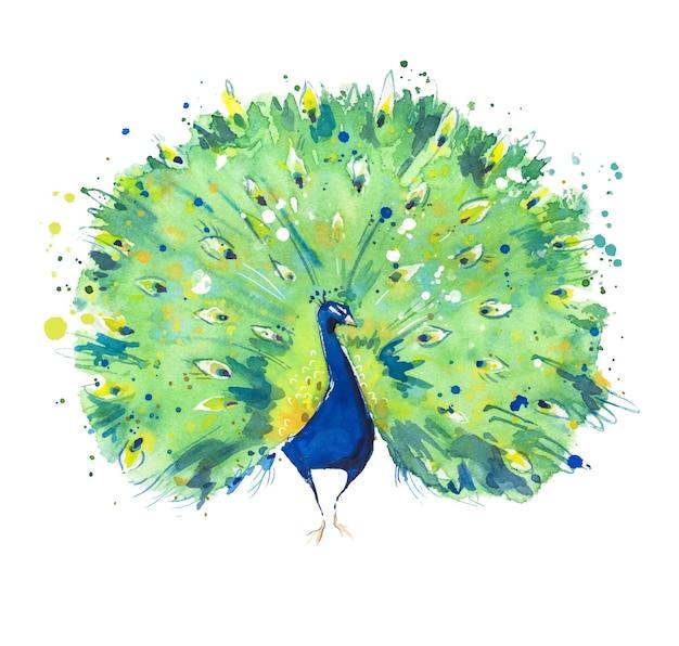 Oiseau paon répandant sa queue illustration aquarelle peinte à la main