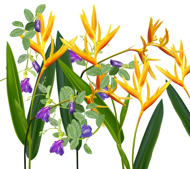 Oiseau de paradis et fleurs de pois de papillon