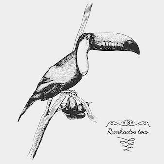 Oiseau réaliste dessiné à la main, style graphique de croquis,