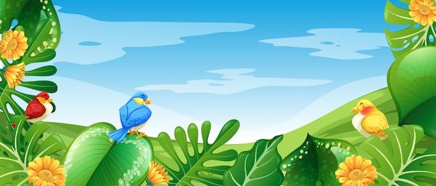 Oiseaux dans nature paysage