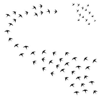 Oiseaux dans le troupeau