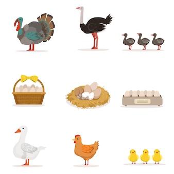 Oiseaux de ferme élevés pour la viande et pour la ponte des œufs, agriculture biologique ensemble d'illustrations avec des animaux