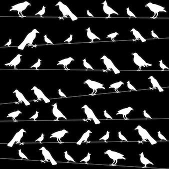 Oiseaux sur des fils photo