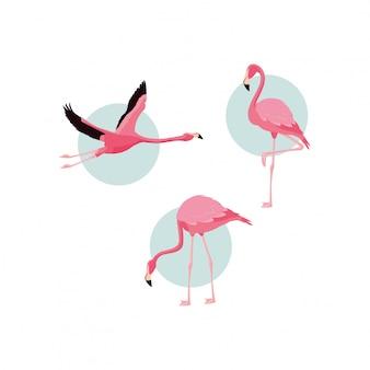 Oiseaux de flamants roses affluent