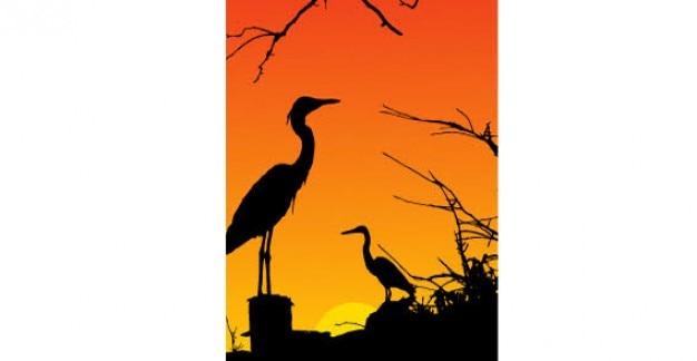 Oiseaux héron silhouette