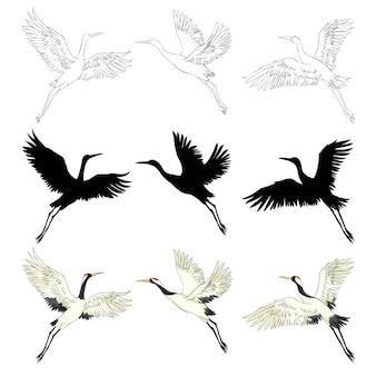 Oiseaux sauvages en vol. animaux dans la nature ou dans le ciel. grues ou grus et cigogne ou shadoof et ciconia avec des ailes. croquis gravé dessinés dans un style vintage à la main.