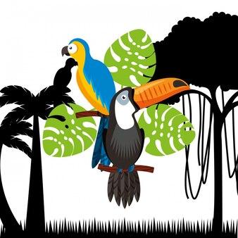 Oiseaux toucan et ara