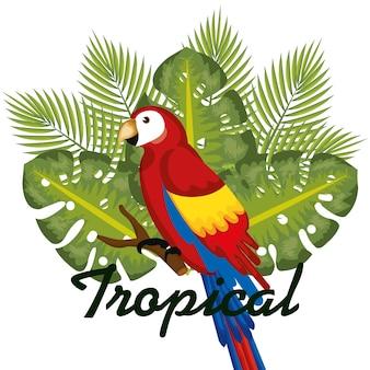 Oiseaux tropicaux