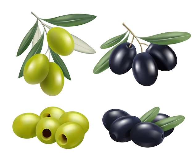 Olive réaliste. les branches d'olivier de nourriture de nature grecque détendent les symboles d'huile de spa
