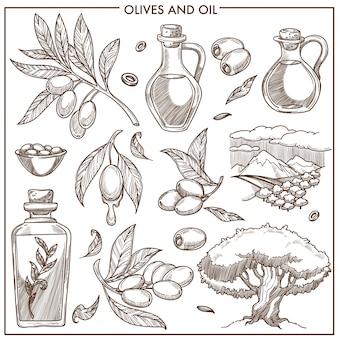 Olives sur des branches et de l'huile