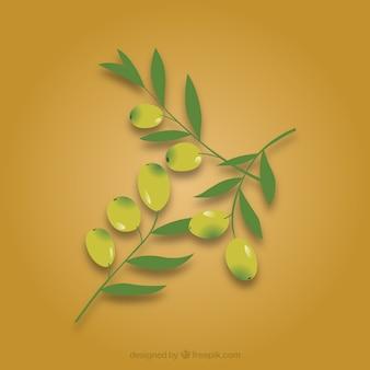 Olives feuilles de branche dans le pack vecteur