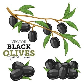 Olives avec des feuilles,