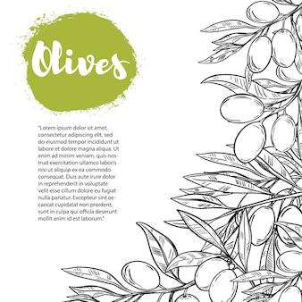 Olives. modèle de flyer avec bordure de branche d'olivier. élément pour affiche, flyer,. illustration