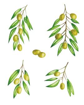 Olives Vertes Sur Une Branche Définie Illustration Aquarelle Isolée Vecteur Premium