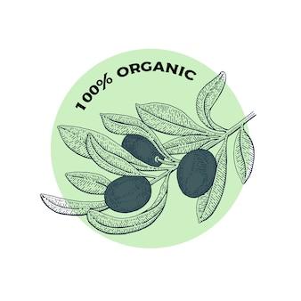 Olivier. concept de logo vintage. illustration de vecteur botanique dessinés à la main, isolé sur fond blanc. style de croquis.