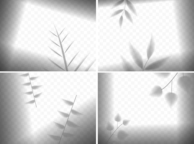 Ombres de feuilles réalistes dans la composition de cadres sur transparent