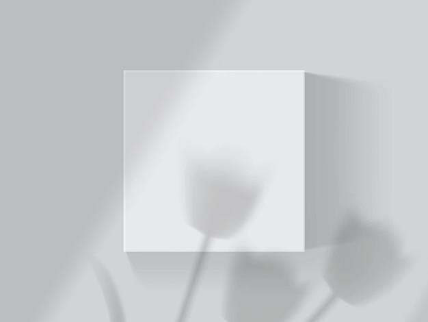 Ombres des tulipes et des fenêtres sur une boîte blanche