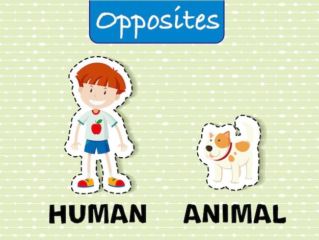 Opposer l'illustration de flashcard de l'éducation de mot