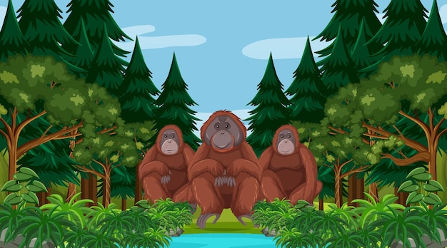 Orang-outan dans une scène de forêt ou de forêt tropicale avec de nombreux arbres