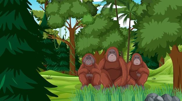 Orang-outan Dans Une Scène De Forêt Ou De Forêt Tropicale Avec De Nombreux Arbres Vecteur gratuit
