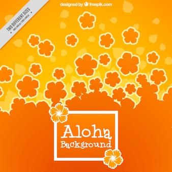 Orange fleurs hawaïennes fond