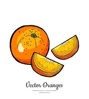 Oranges set vector isolé. orange entière coupée en tranches rondes et demi-coupées. fruits dessinés à la main.