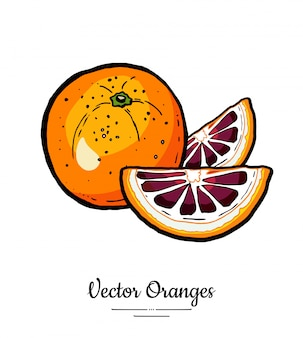 Oranges set vector isolé. tranches de demi-rondes entières coupées en orange rouge. fruits dessinés à la main.