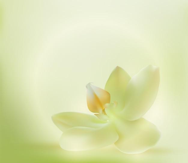 Orchidée douce au spa. fleur de paradis spa. illustration réaliste.