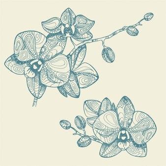Orchidée fleur décorative illustration dessinée à la main