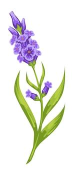 Orchidées violettes avec tige épaisse et vecteur de feuillage