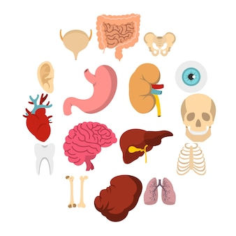 Organes humains mis des icônes à plat