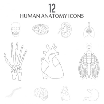 Organes humains outline icon set interne