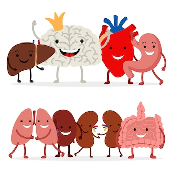 Organes internes humains mignons sur fond blanc