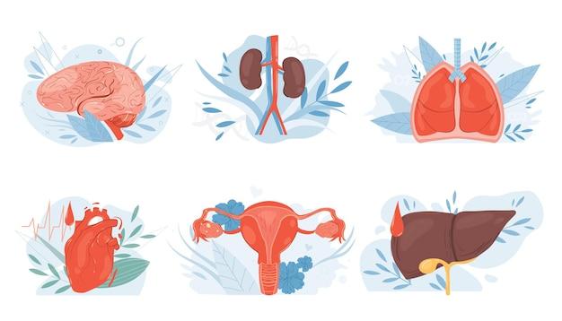 Organes internes humains plats de dessin animé