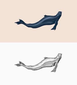 Otarie à fourrure créatures marines animal nautique ou pinnipèdes signes rétro vintage doodle style dessinés à la main