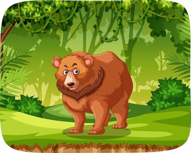 Ours brun dans la scène de la jungle