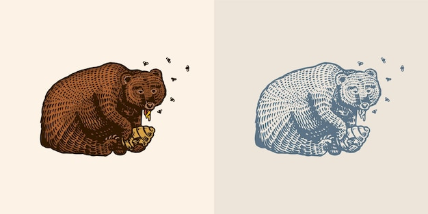 L'ours brun grizzli mange du miel chez un animal sauvage dans la patte une ruche avec des abeilles vue latérale dessinée à la main