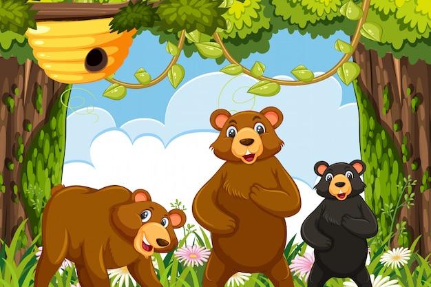 Ours dans la scène de la jungle