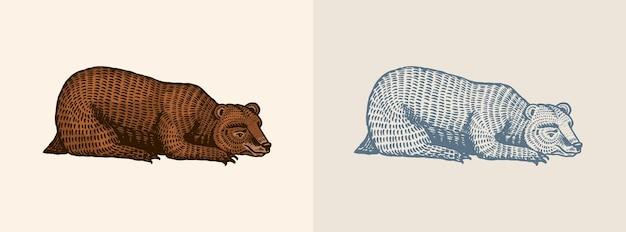 Ours grizzli dans un style vintage marron animal sauvage vue latérale bête endormie dessiné à la main vieux gravé