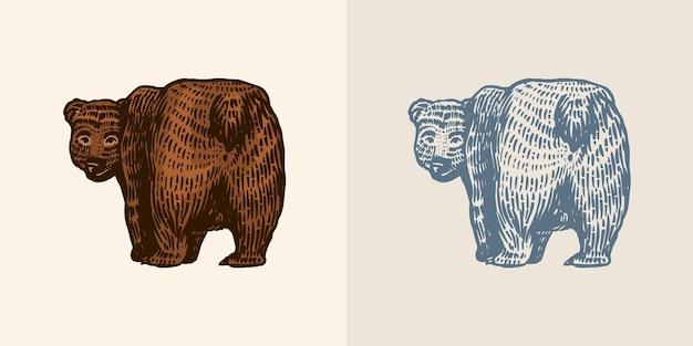 Ours grizzli en vue de côté d'animal sauvage brun de style vintage la bête regarde en arrière gravée à la main