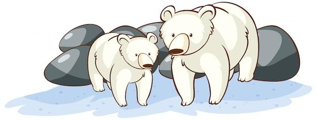 Ours polaires sur blanc
