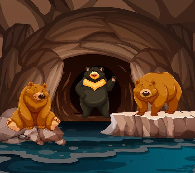 Ours vivant dans la grotte